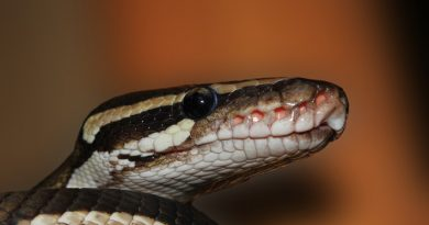 Photo of a snake's head