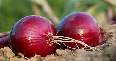 Two red onions