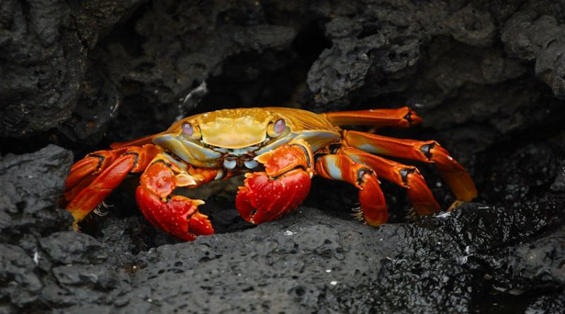 photo of a crab