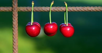 Three cherries hanging from a wire