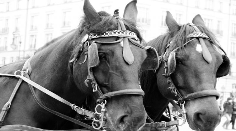 Two horses wearing blinkers