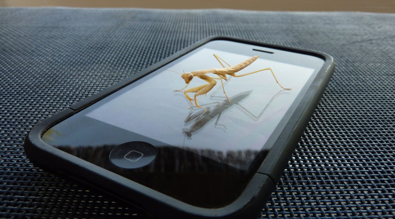 Praying Mantis on an iPhone