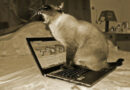 Not All Internet Cats Are Cute: Meow Bot Is A Database Destroyer